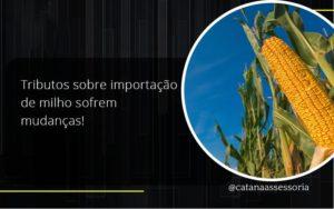 Tributos Sobre Importação De Milho Sofrem Mudanças! Catana Empresarial - Contabilidade em São Paulo | Catana Assessoria Empresarial